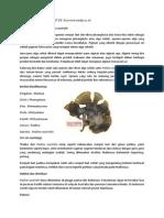 artikel seaweed padina australis