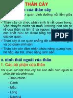 THÂN CÂY_New