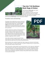 Tips dan Trik Budidaya Buah Naga di Kebun.pdf