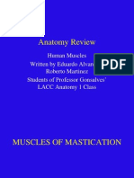 Human Anatomy Muscle Review!
