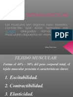 03. Sistema Muscular