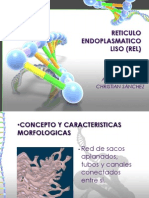 Reticulo Endoplasmatico Liso (Rel)