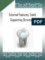 15 Teeth