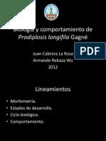3 Biología de Prodiplosis longifila Gagné