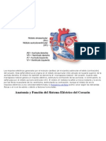 Sistema de conducción eléctrica del corazón