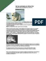 Adaptaciones de los animales al clima frío