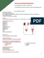 4. Infecciones de Vías Urinarias