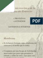 Membrana Del Eritrocito