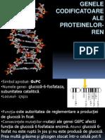 Genele Codificatoare Ale Proteinelor-REn