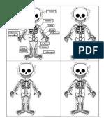 minillibre esquelet
