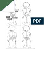 minillibre aparell digestiu (1)