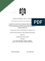 Botanica - Agricultura - Tesis - Identificación de hongos micorrízicos - Cultivo de Lechuga