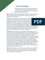 Características de las etapas del desarrollo