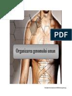 CURS 14 Organizarea Genomului Uman