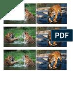 tigers.docx