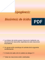 Lipogensis.ppt