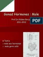 Male Hormones