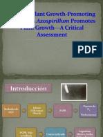 Presentacion AzOSPirillum Liliana
