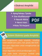Sistem Ekskresi Amphibi