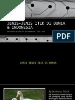 Jenis-Jenis Itik di Indonesia dan Dunia