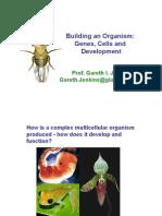 building an organism