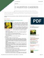 TALLER de HUERTOS CASEROS