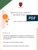 2-Adaptacion Lesion y Muerte Celular