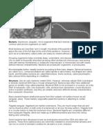 Handout Bacteria Viruses and Fungi