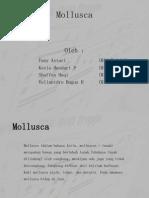 Mollusca2_2