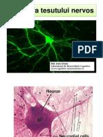 Structura tesutului nervos