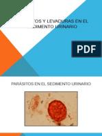 8. PARÁSITOS Y LEVADURAS EN EL SEDIMENTO URINARIO