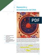 reparacion y recombinación DNA