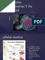 Las Células Embrionarias Y Su Legalidad
