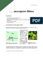 14. Sauvignon Blanc