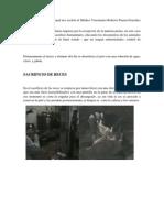 Reporte de Rastro Municipal Md Ferrioly