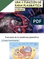 2 Estructura y función de la membrana.pdf