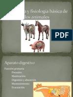 3.- Anatomía y fisiología digestivo (1)