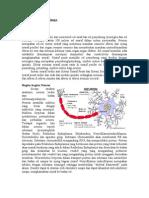 Fisiologi Neuron dan Sinaps.doc
