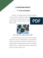 fresa-121004010750-phpapp01