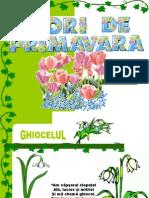 Flori de Primavara slide