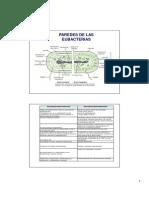 Sintesis de Peptidoglicano y Antimicrobianos
