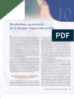 Capitulo X Metabolismo Quimiótrofo de la  Energía Respiración Aerobia