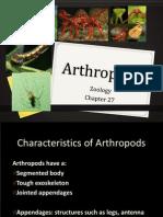 27 arthropods