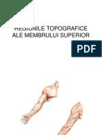 Topografia Membrului Superior