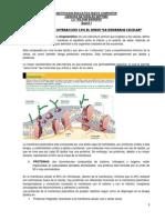 1. GUIA CELULA.docx