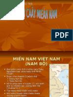Trai Cay Mien Nam