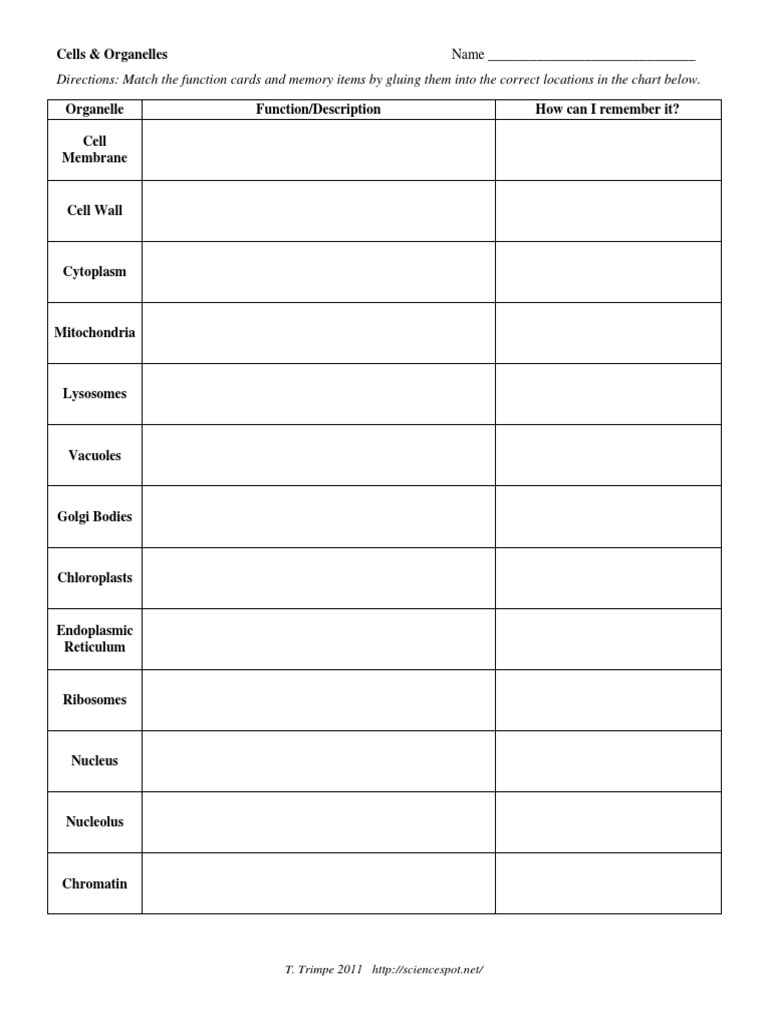 Cells Organelles w Kst Cell Nucleus – Virtual Cell Worksheet Answers
