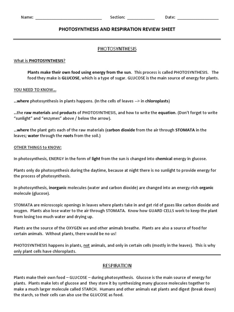 What are the products of photosynthesis and respiration - Photosynthesis And Respiration Review Sheet Cellular Respiration Photosynthesis