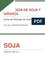 Soja y Girasol 2012