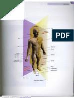23536060 Atlas de Anatomie 3